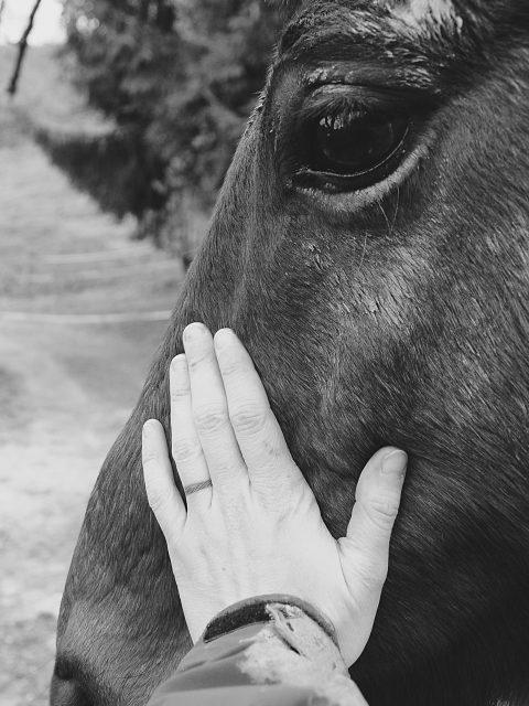 abri chevaux9
